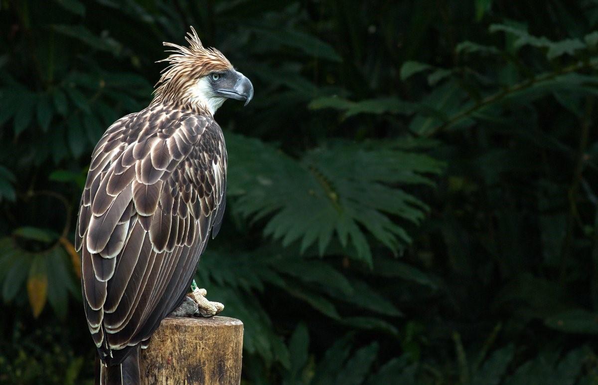 Uitjes met wilde dieren in de Filippijnen